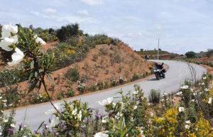 Motorradfahrer fahren durch eine kurvenreiche Straße.
